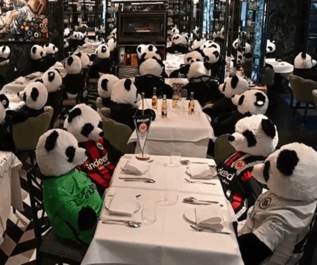 Deciden  llenar su restaurante vacío con osos panda de peluche.