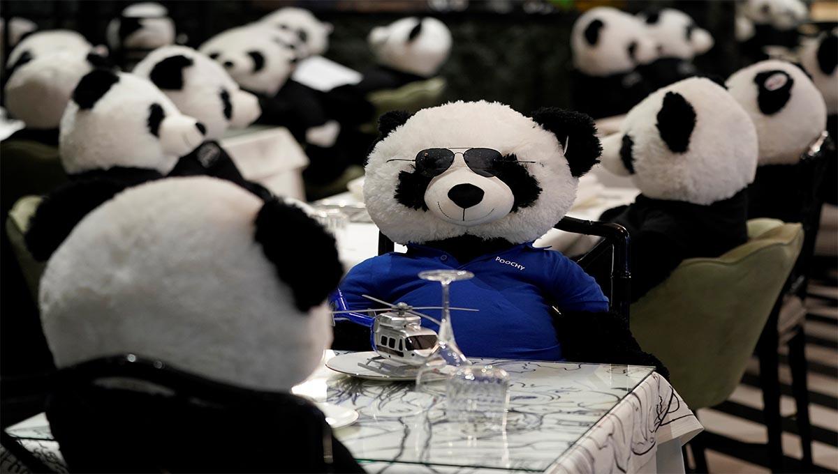 Deciden llenar su restaurante vacío con osos panda de peluche