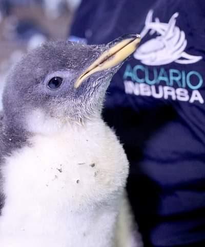 Alex el pingüino