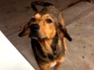 Asesinan cruelmente a perrito con un hacha